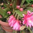moj kaktus
