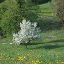 pomlad...