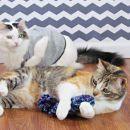 Mačje igračke