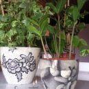 darila - cvetlična lončka *črno-belo1,2*