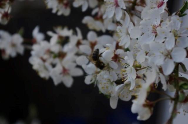 Cvetoča pomlad