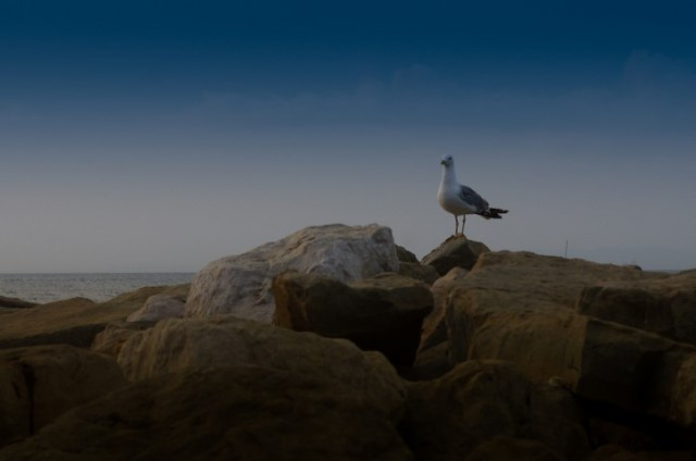 13. avgust -  na obali - foto