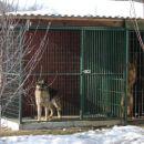 desno aykis =) lejvo zbesnjene pes !!!!