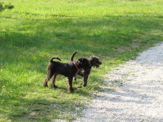 Balder in Beyla(sestrica)  na sprehodu  - foto