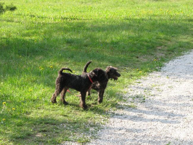 Balder in Beyla(sestrica)  na sprehodu  - foto povečava