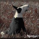 mango umetniška slika - product by biby