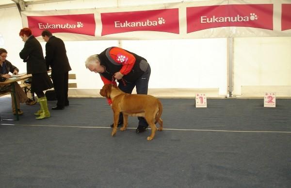 CACIB Vrtojba 09.04.2006-DDB - foto
