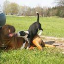 napad bulla