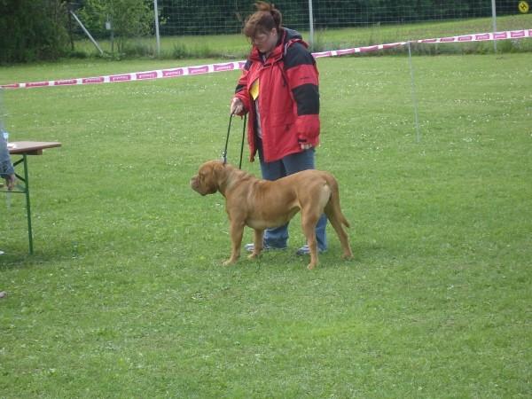 Special Club Show DDB, Amstetten 2006 - foto