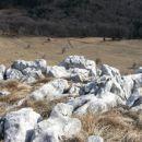 del južnega pobočja tik pod vrhom Srednje gore ni poraščen z drevjem in omogoča lepe razgl