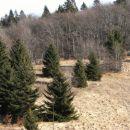 Šmonove strelice: mlado drevje počasi osvaja nekdanje senožeti...