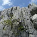 drevesce je pognalo iz žive skale, dovolj je bilo prgišče prsti in seme, ki je po čudaškem