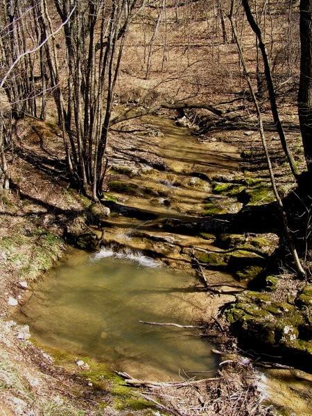 Kraški potok ( žal se ne spomnim imena ), ki kmalu izgine v podzemlje ( okolica Kozine )