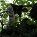 gozdna plezalka