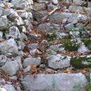 Na jugo - zahodnem pobočju Svete gore nad reko Sočo se je ohranilo tole stopnišče, ki so g