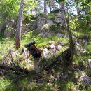 naš dostop je potekal deloma po strmi lovski stezi, ki si komaj zasluži ime steza, okolje