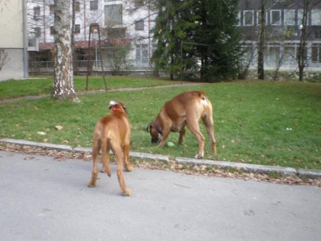 Polo in Gina -apr09,z Barom nov08 - foto