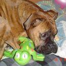 moja žaba