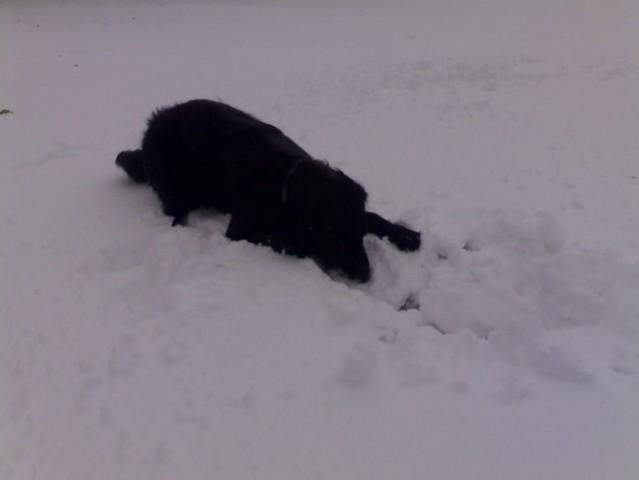 Sneg 2007 - foto