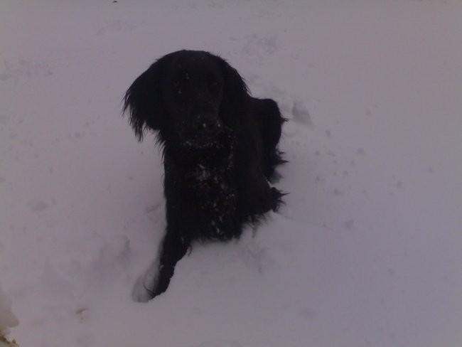 Sneg 2007 - foto povečava
