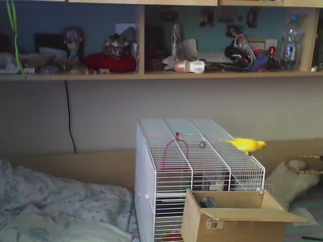 Moje domače živali:) - foto