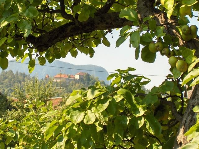 Narava - julij 2006 - foto