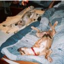 Jana lahko spi na podu