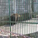 Medved Gost. Tušek  Jasnica pri Ribnici