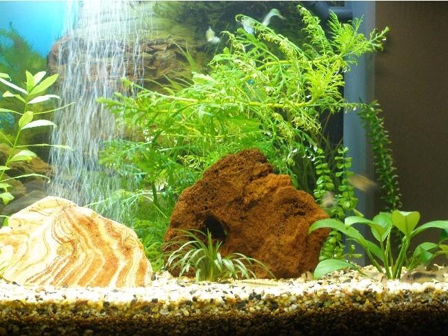 Akvarij - foto povečava