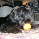 Mmm, kako je dobro to jabolko! Kdo bi si mislil?
