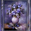Cvetoči Irisi