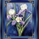 Trije Irisi
