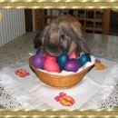 Moj zajček Mandi