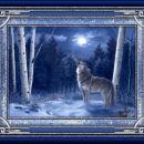 Howling at moon