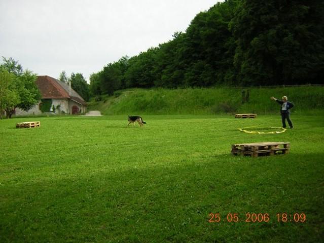 šolanje psov 25.5.2006 - foto