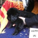 Lilith, 5 tednov / 5 weeks