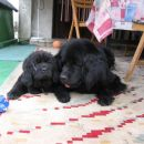 Lotte z mamo