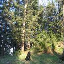 Gozdni okrasek