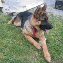 Naša psička