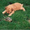 Vasco v družbi kopenske želve
