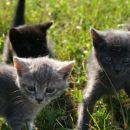 Črn samček Balki, Siva samička Nika in sivo progasta samička Nana.