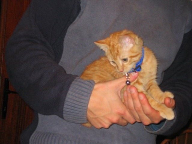 Muc (februar 2005) - foto