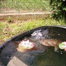 Želva Rika