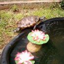 Rika se pripravlja za skok v vodo ...