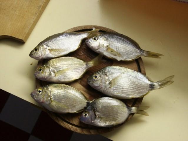 Ribistvo - foto