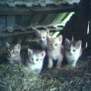 mačkice stare 1 mesec