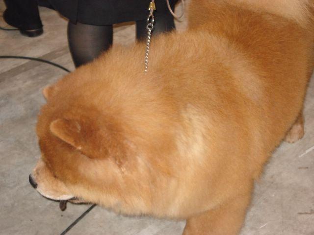 Zanimive (pes,cres,jadranje) - foto