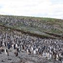 Otok pingvinov
