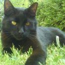Medy - umrl v noči iz sobote na nedeljo - 15.03.2009
