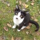 ..drugič - pikica je žal pokojna-umrla 27.01.2011